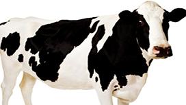 کنترل بیماری های حیوانات با ازون